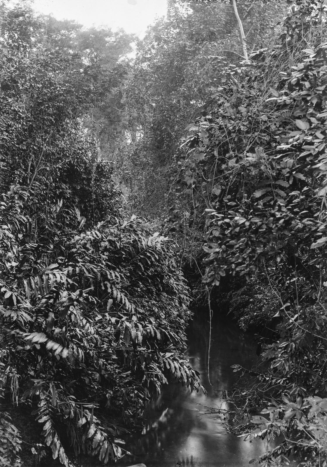 55. Леса в Момбобахе