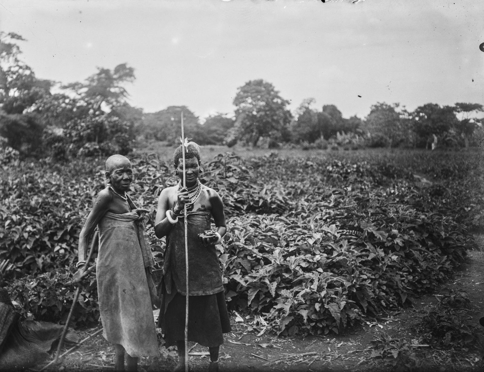310. Две женщины чагга на поле маниоки