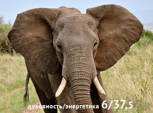 слон_2_500.jpg
