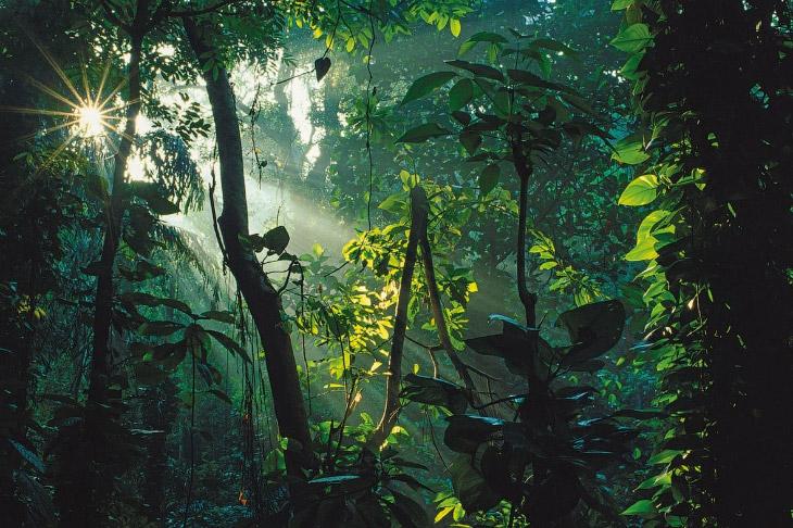 Джунгли Индии являются средой обитания самых редких и экзотических видов животных, и ни одно из них