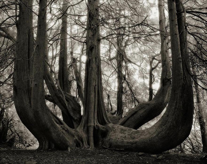 Этот фотограф 14 лет снимал старейшие деревья в мире