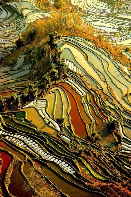 Нет, это не картины Ван Гога. Это Китай, провинция Юньнань. (6 фото)