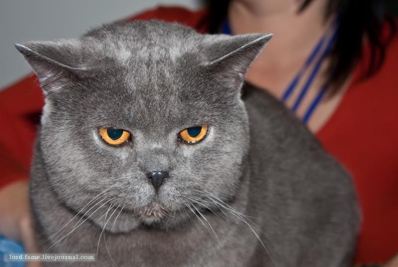 cats1 (1).JPG