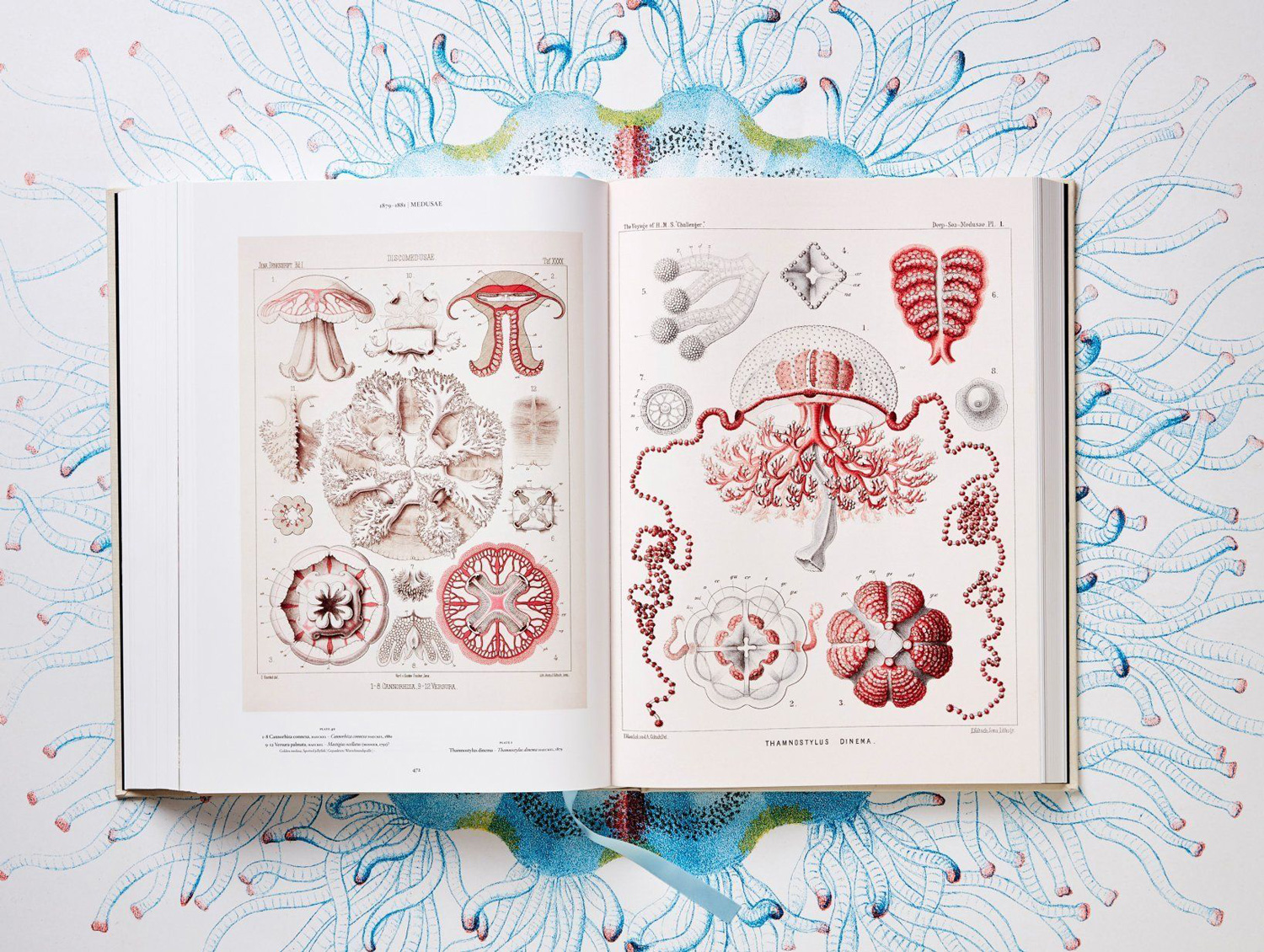 German biologist and artist Ernst Haeckel dedicated his life studying far flung flora and fauna,  dr