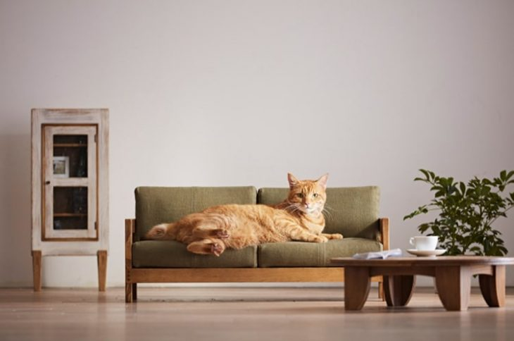 Craftsman Made Cat Furniture by Okawa Kagu