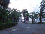 У моря Чёрного, в Абхазии, время зимнее, Новогоднее (1).JPG