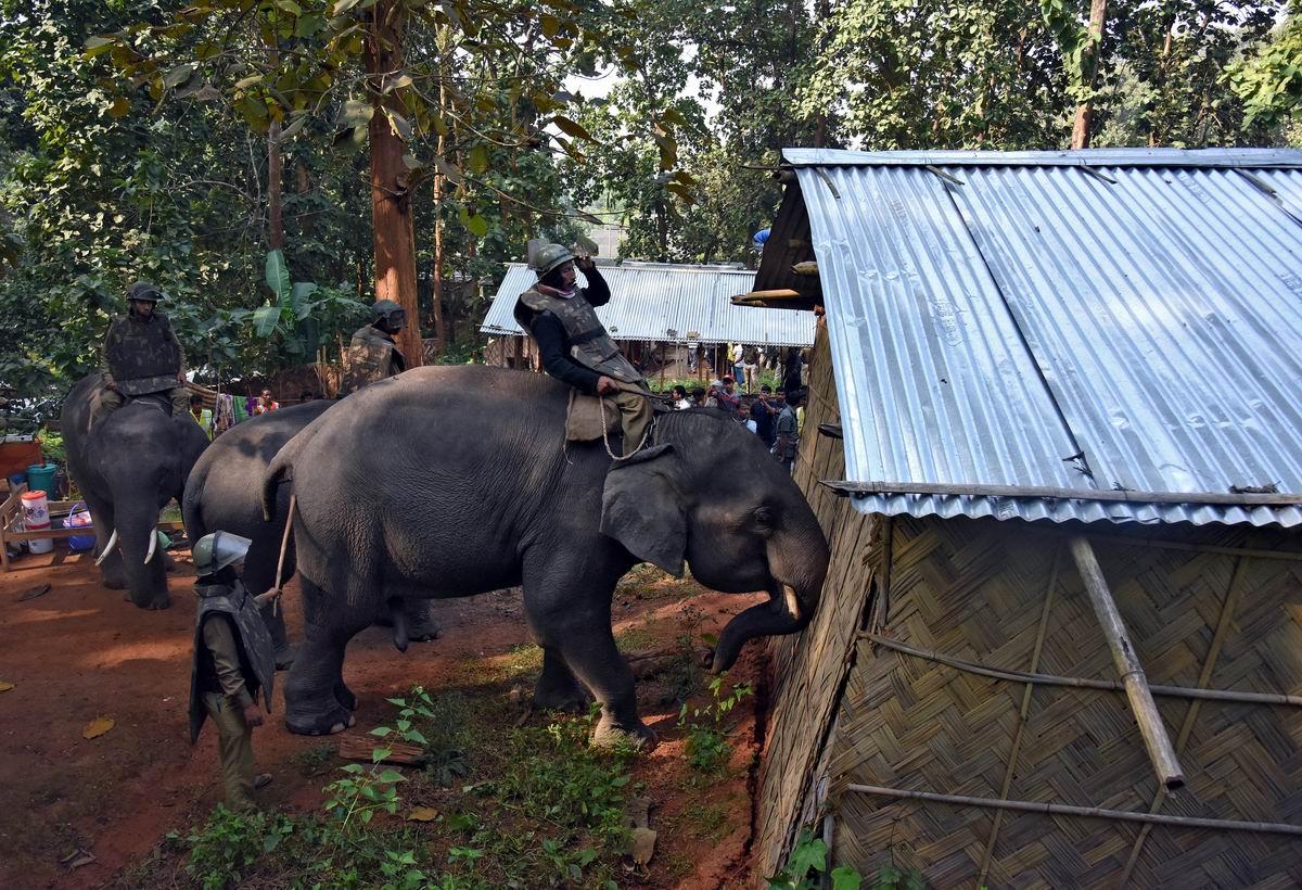 Слоны вместо бульдозеров: Живые боевые машины индийского спецназа