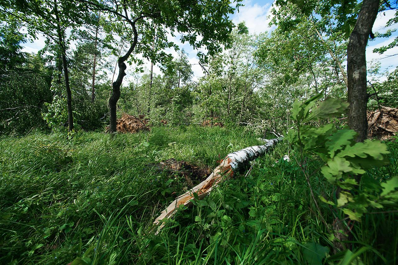 фотосъемка поваленного леса