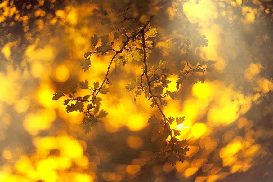 autumn0031-59e7b21d8e410__880.jpg