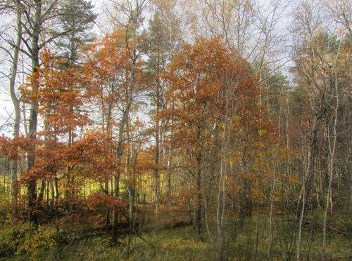 Октябрь задубел :)