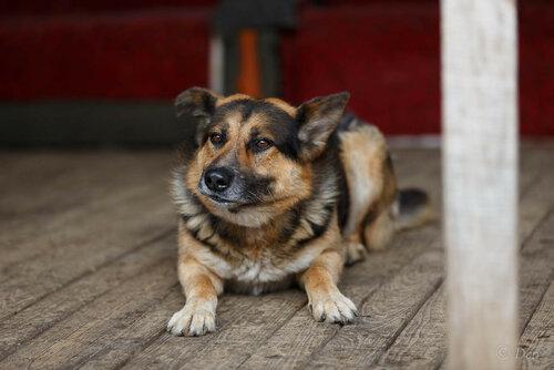 Муля собака из приюта догпорт фото