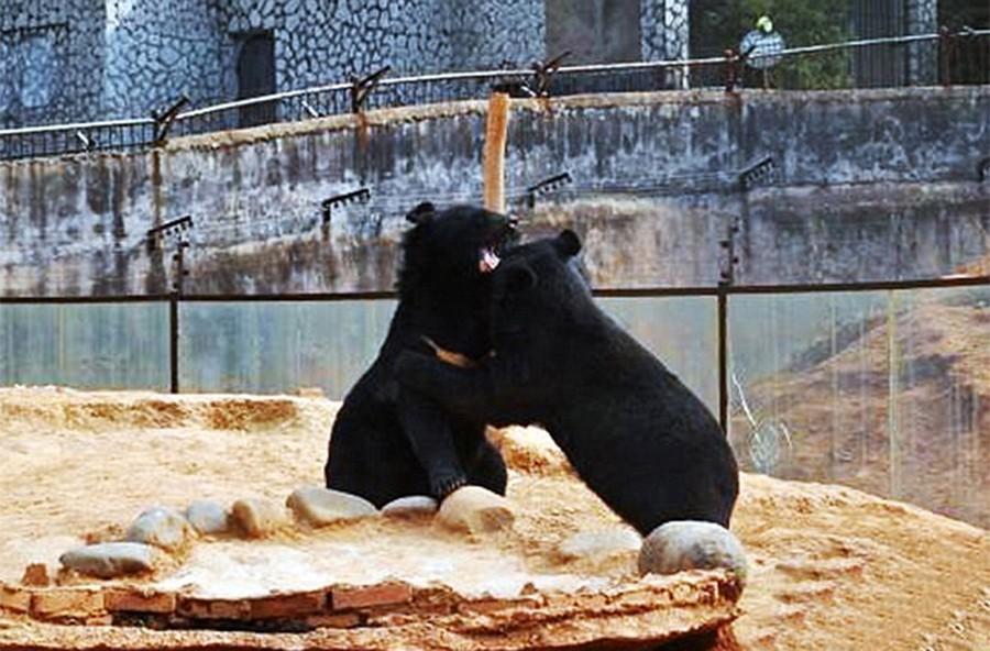 4. Брат и сестра играют вместе в спасательном центре диких животных Юньнани, где они теперь живут.