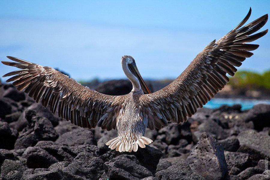 Путешествие на Галапагосские острова. Часть 1