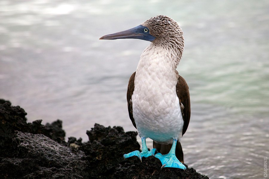 Сан Кристобаль — единственный остров на архипелаге, где есть резервуар с пресной водой — Лагуна Эль