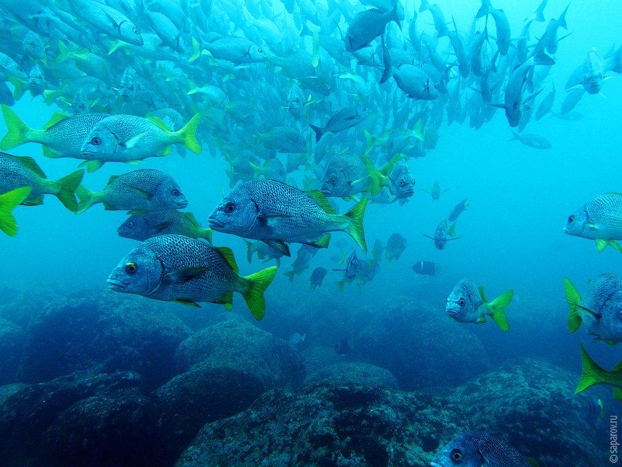 Под водой я провел в общей сложности больше восьми часов, за это время я видел: одного лобстера, 5-6