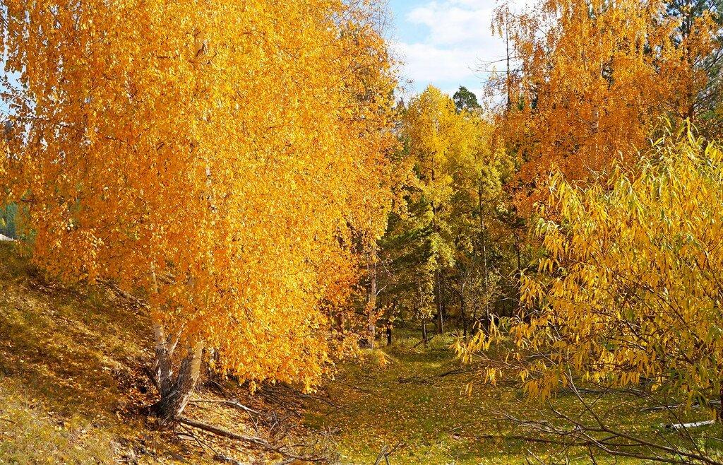 Осенние краски.jpg
