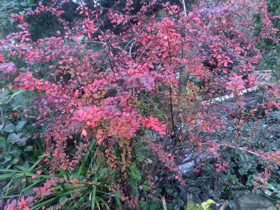 цветы-осени-2.jpg