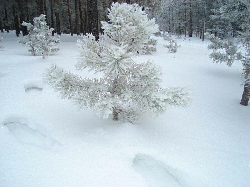 Красота зимней Зеренды. Автор- Евгения Шамрай. p08.jpg