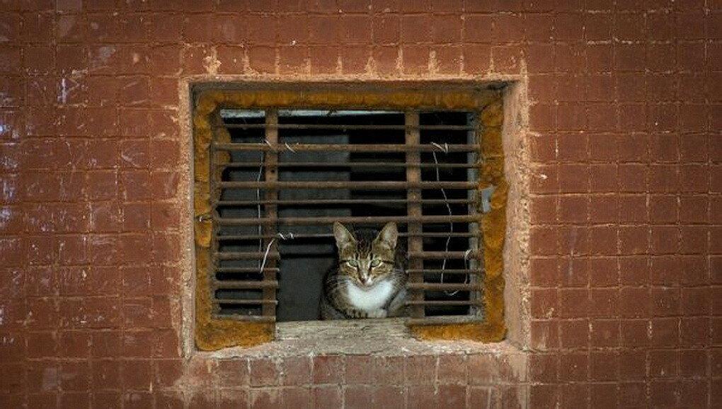 Кошкам вернут доступ в подвалы жилых домов