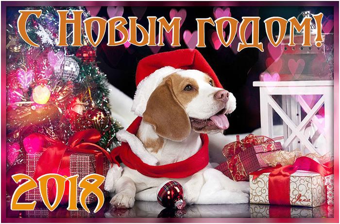 139340128_Dogs_Holidays_Christmas_458573.jpg