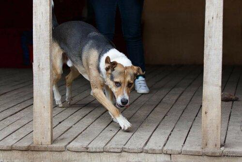 Фил и Ластик собаки из приюта москва