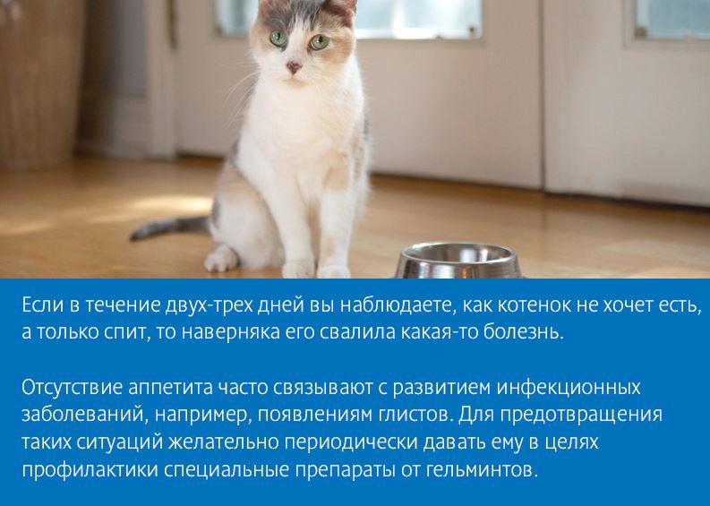 Кот ничего не есть похудела