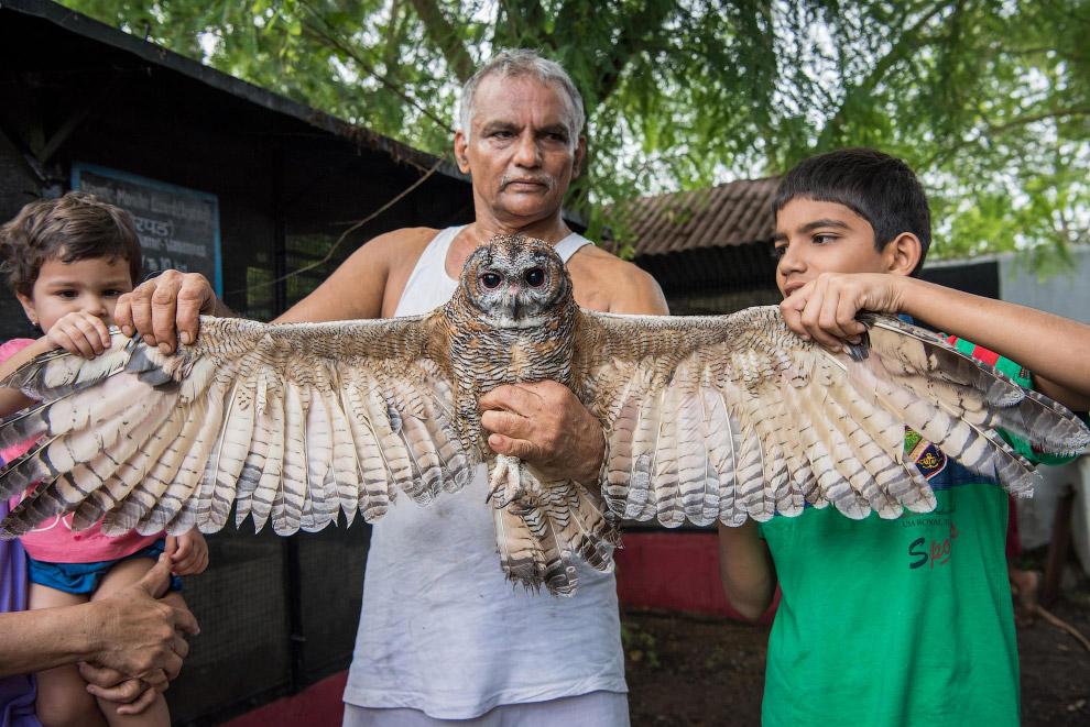 Друг семьи – хамелеон. (Фото Haziq Qadri):