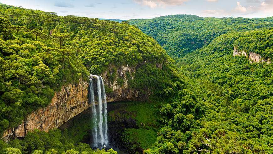 7. Защитники природы договорились в следующие шесть лет посадить в дождевых лесах Амазонии 73 миллио