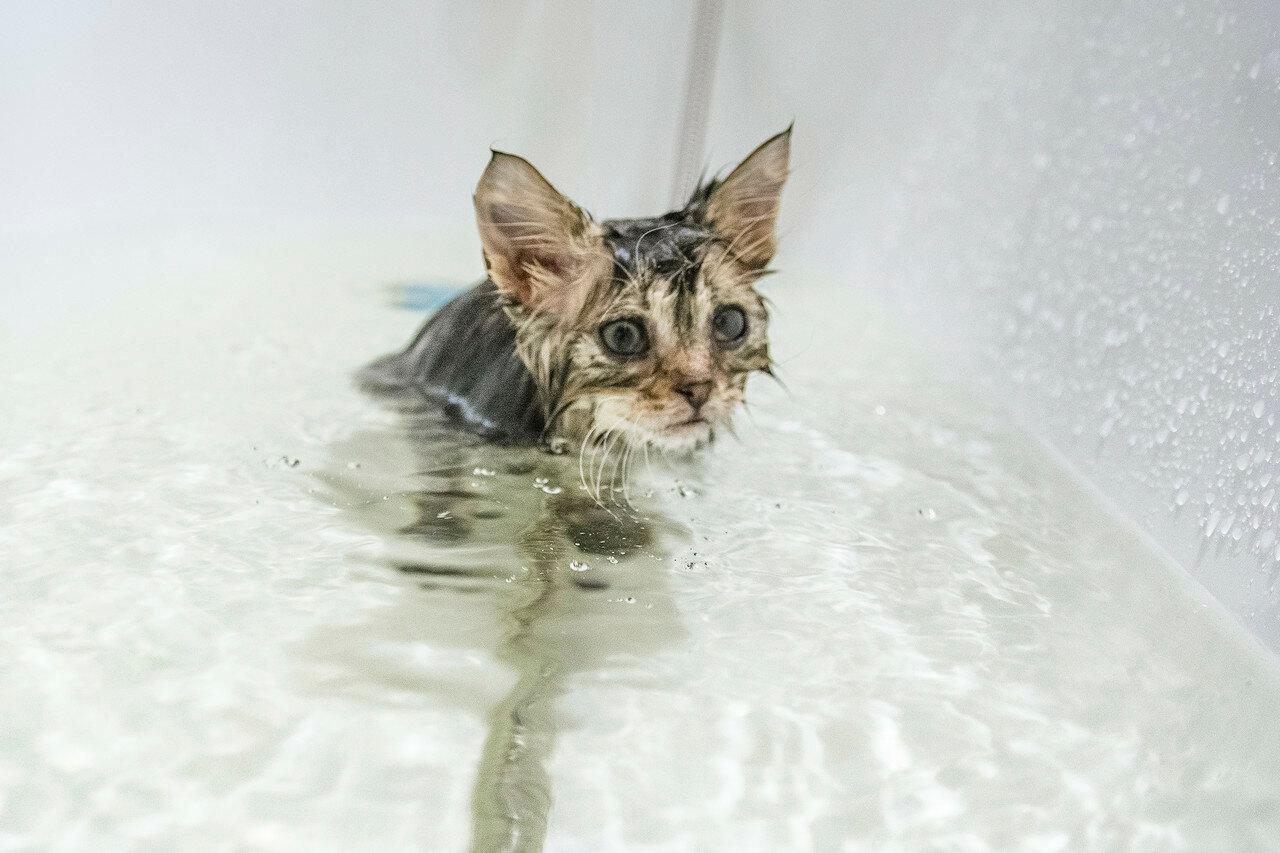 мокрая киска видео онлайн телефон