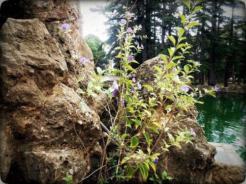 Камни и цветы