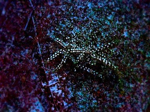 Октябрь,первый снег на еще не опавших листьях. Кусты сверху похожи на морских звезд в океане...