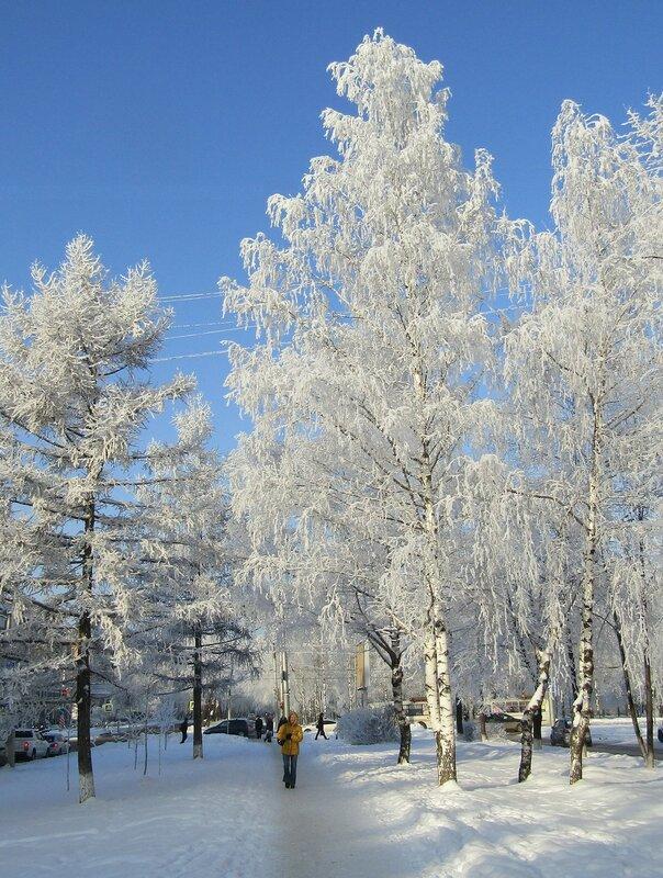 Инеем покрыты деревья и кусты