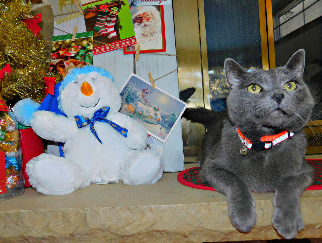 Christmas with Titan&Elvis