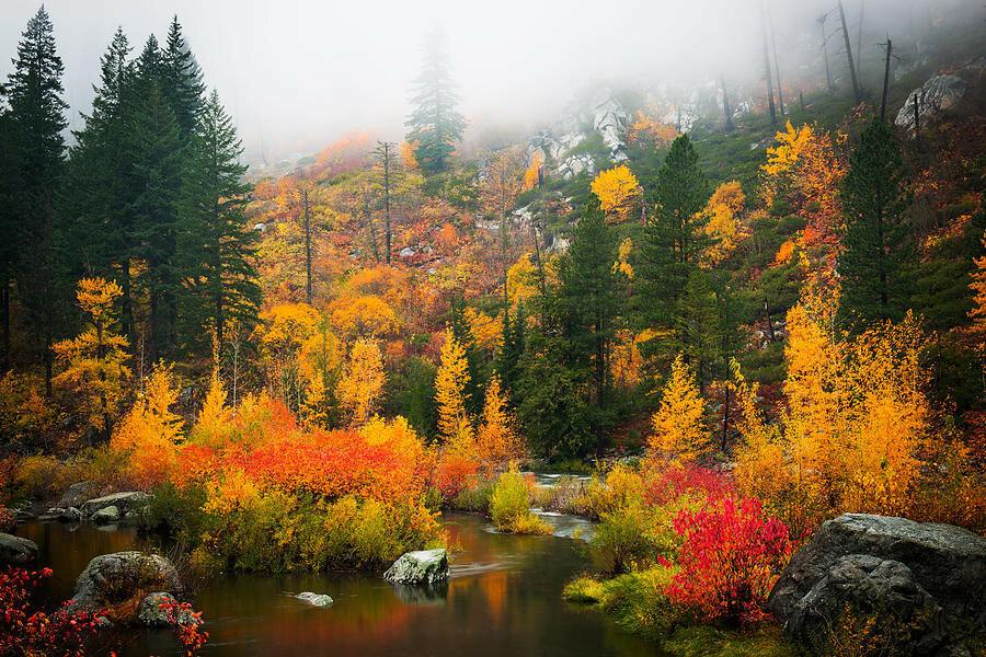 autumn-colors-symphony-dan-mihai.jpg