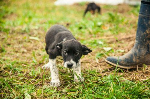 Битлы Капельки собаки из приюта москва