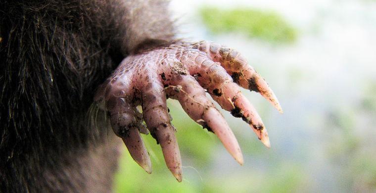17. Лишь с помощью камеры ученым удалось подсчитать, что этот зверек может обследовать «щупальцами»