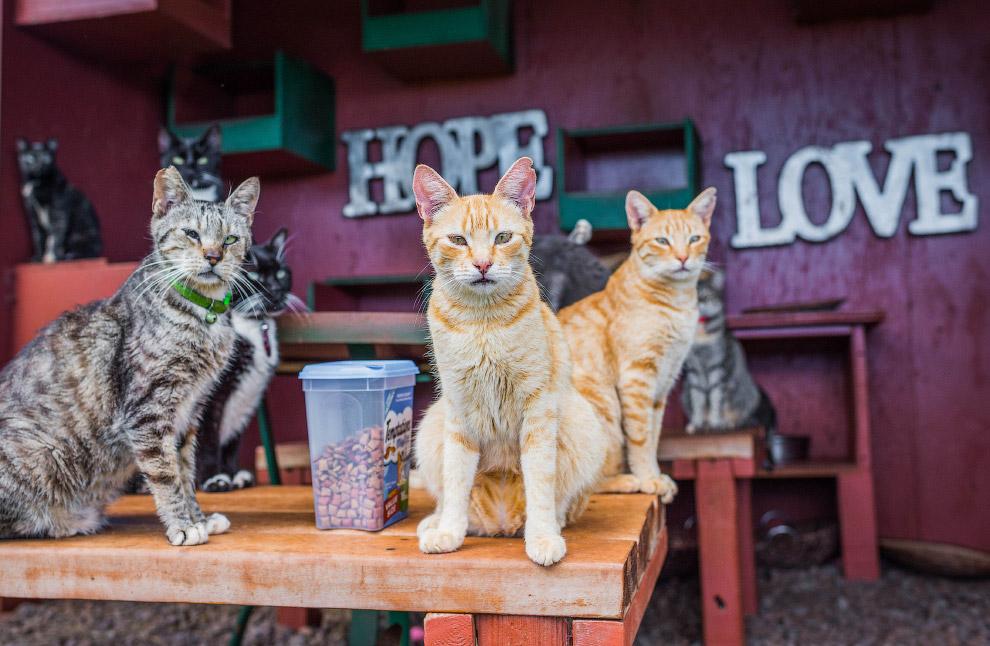 4. Для борьбы с кошачьим перенаселением их стали отлавливать и стерилизовать. (Фото Andrew Marttila)