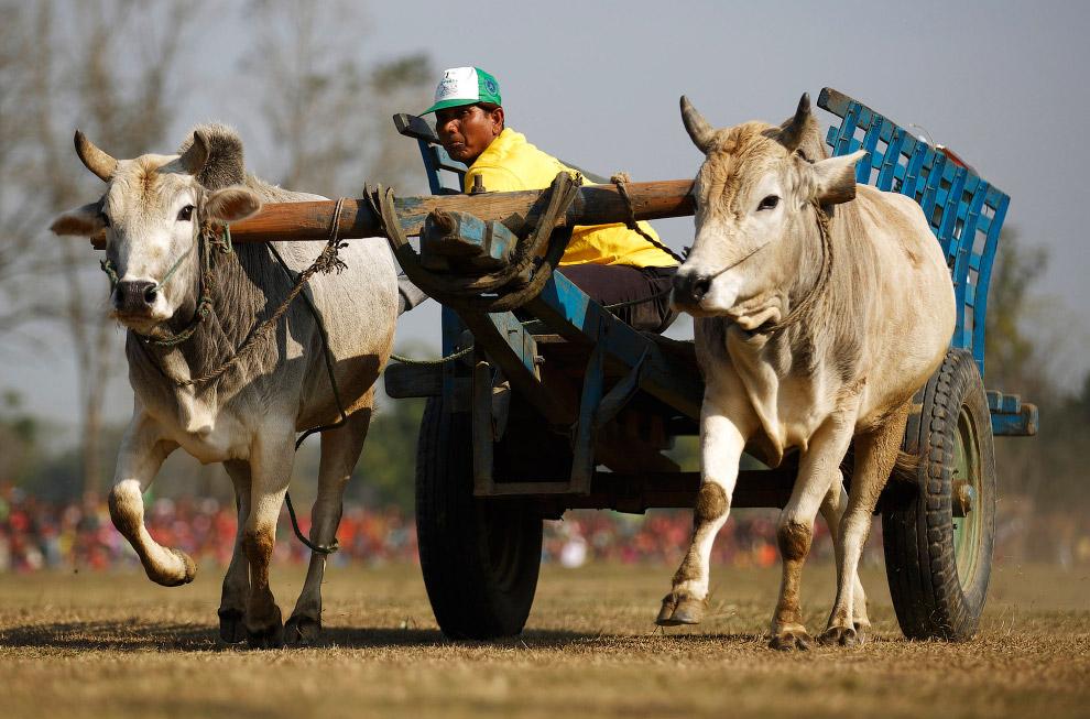 20. На фестиваль подходят все новые участники. (Фото Navesh Chitrakar):