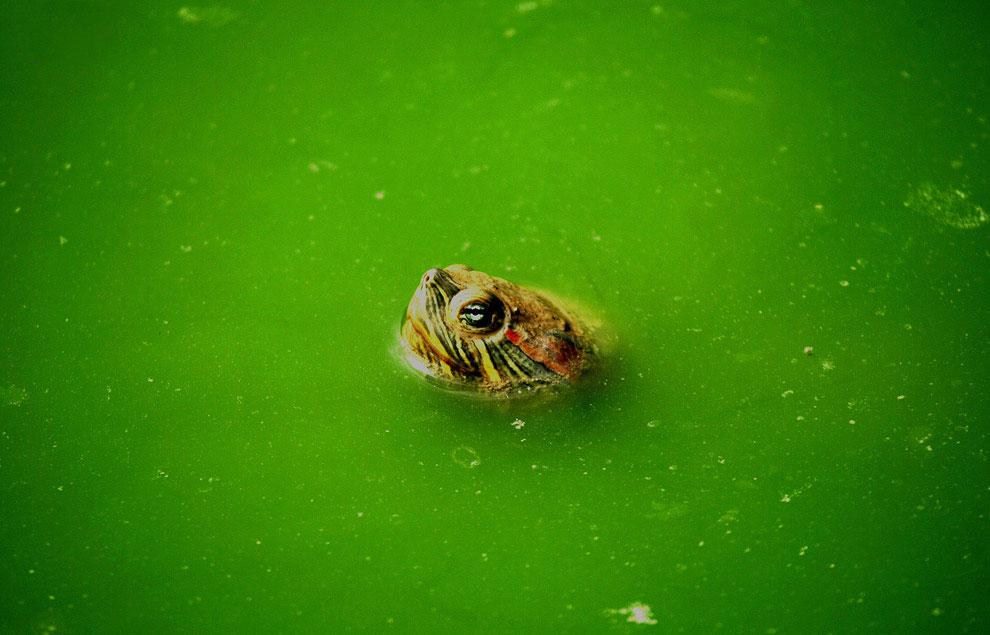 Красное на зеленом     (Фото Bazuki Muhammad | Reuters):