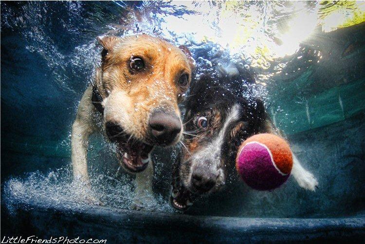 У самого Сета Кастиля есть две собаки — норвич терьер (это один из самых маленьких охотничьих терьер