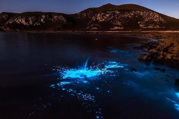 Волшебница-природа: мистическое свечение у берегов Тасмании очаровывает туристов (6 фото)