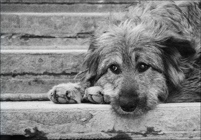 Бездомный, беспородный, старый пес… (1 фото)