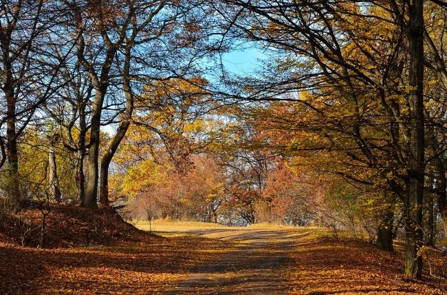 Лес Хоя-Бачу находится в Трансильвании и известен благодаря различным историям о паранормальных явле