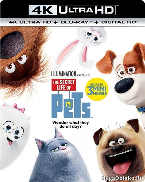 Тайная жизнь домашних животных / The Secret Life of Pets (2016) | UltraHD 4K 2160p