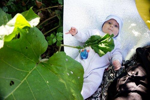 младенец ест лопухи