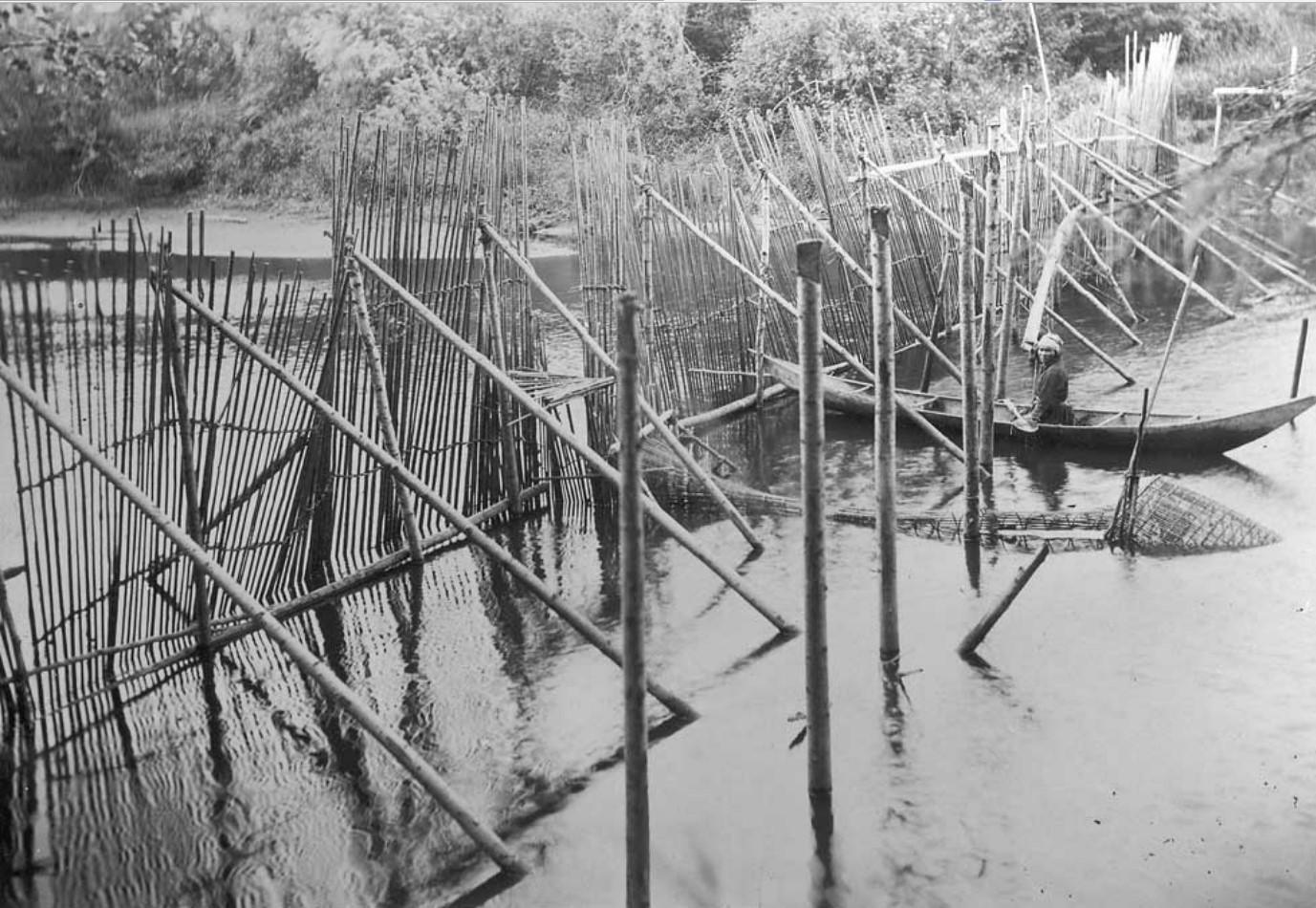 Разнообразные ловушки использовались для блокирования пути возвращения рыбы из их нерестилища