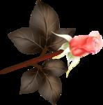 Beautiful Roses #7 (31).png
