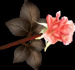 Beautiful Roses #7 (32).png