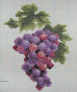 dim_6888_grape_on_vine_06.jpg
