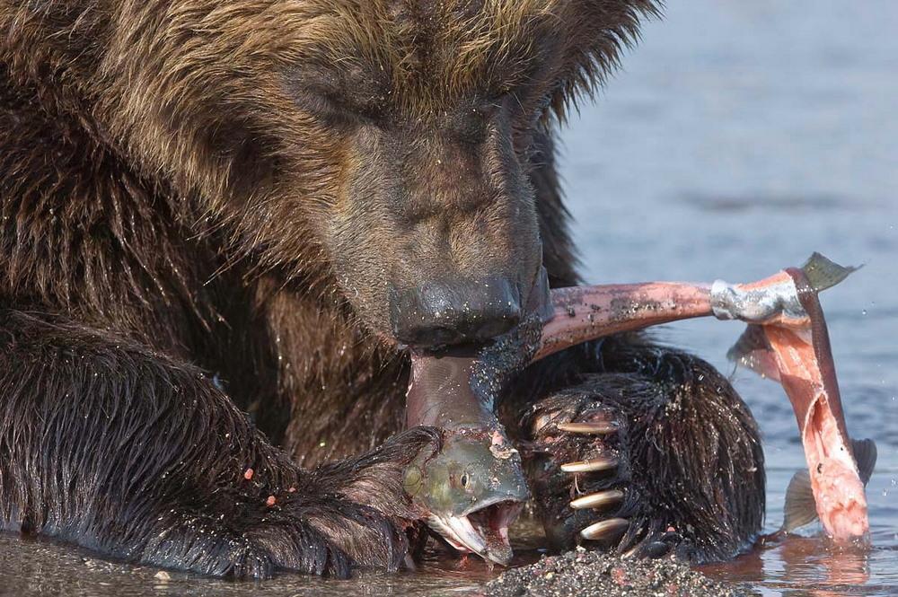 Дикая природа на снимках Сергея Горшкова